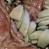 Die Tabelle die Pilze die Parasiten der Organismus der Wirt der Pilz der Parasit die Merkmale der Er